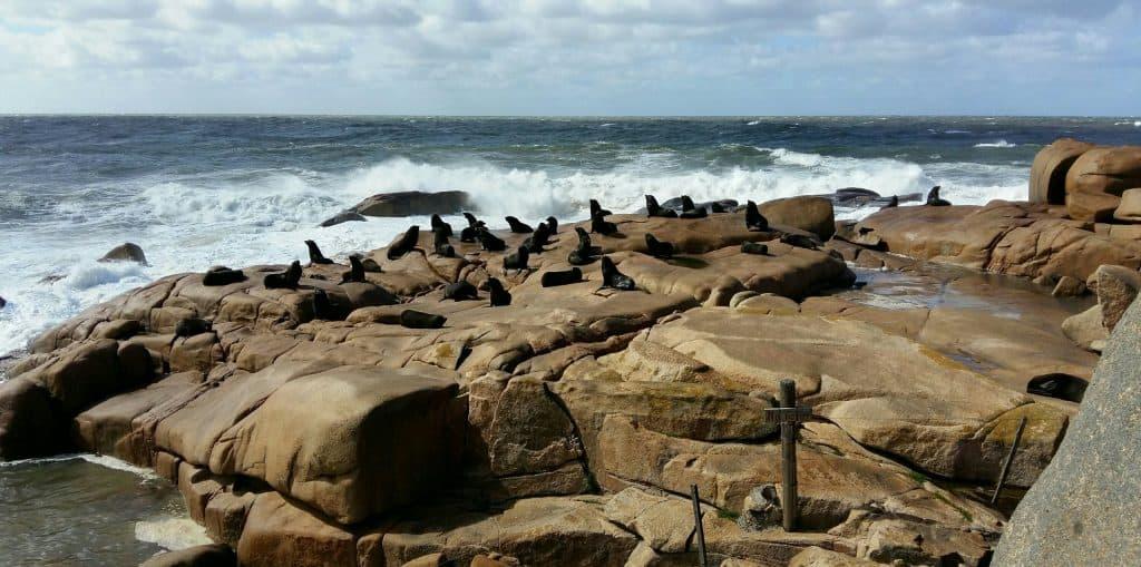 Sea lions, Cabo Polonio, Uruguay