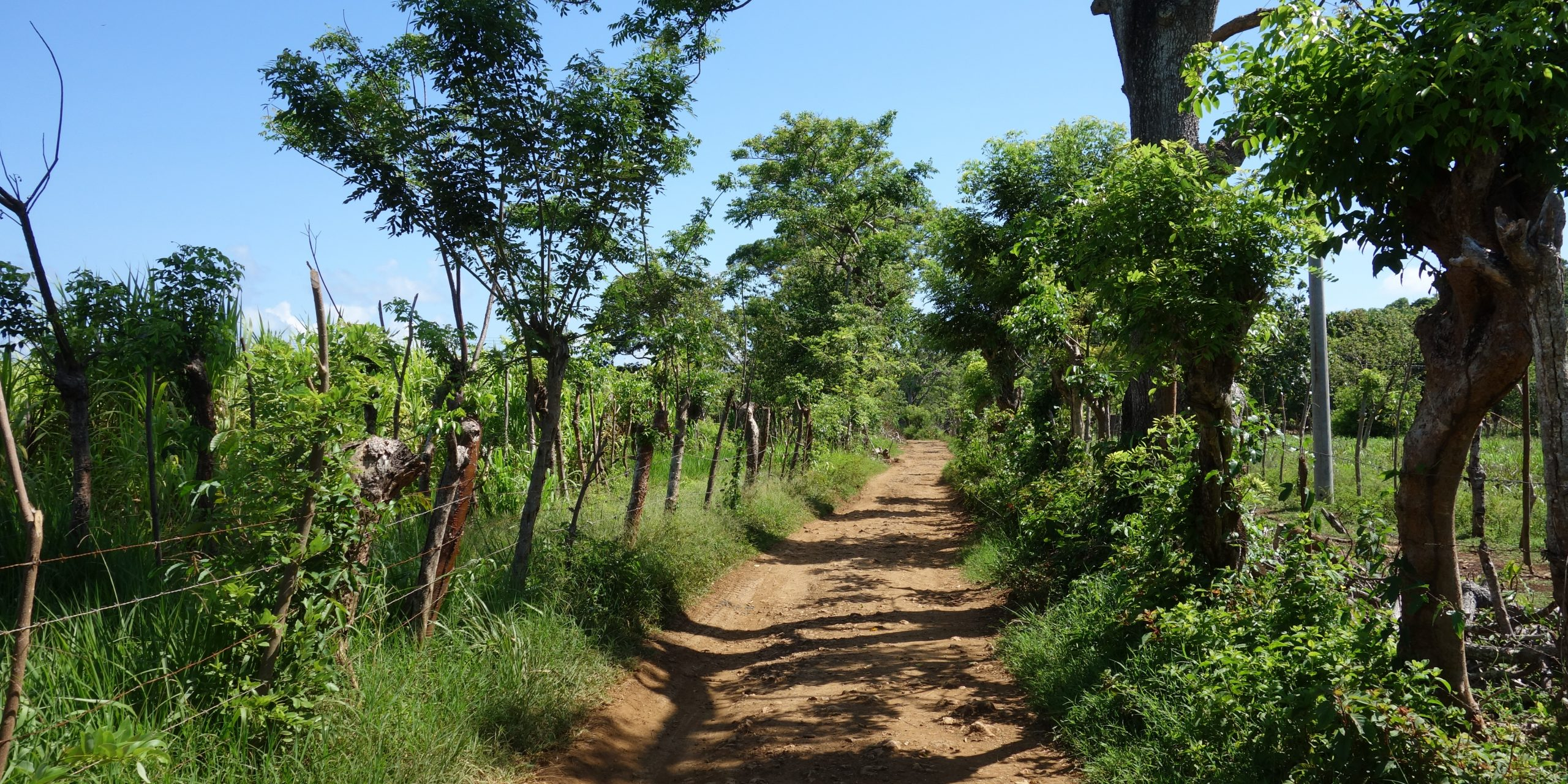 Path to the Pumpkin Hill in Utila, Honduras