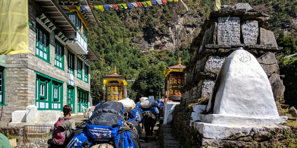 Cows transporting goods in the Everest Base Camp Trek, Nepal