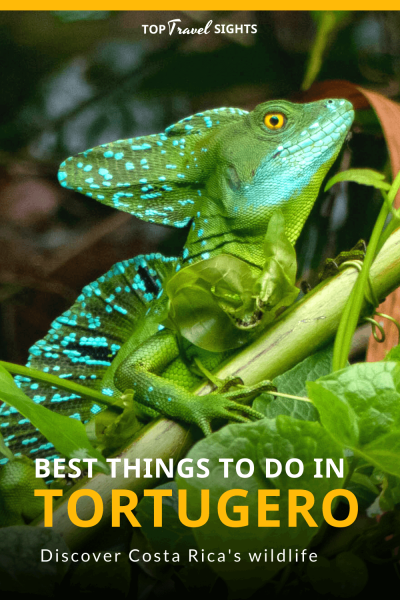 Pinterest image for best things to do in Tortuguero