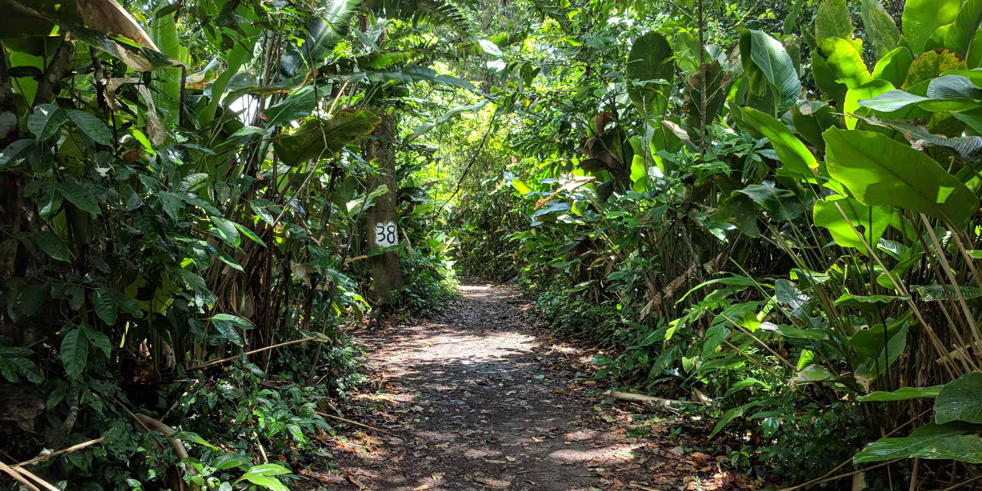 Hiking trail in the Tortuguero National Park