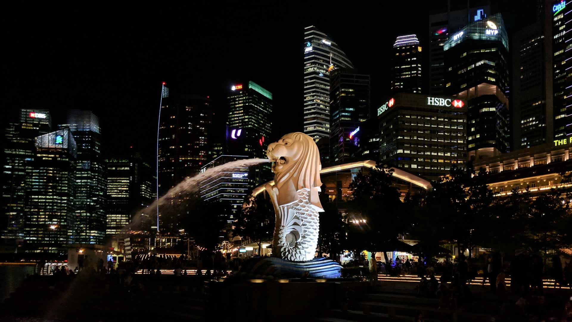 Singapore Sea Lion at night