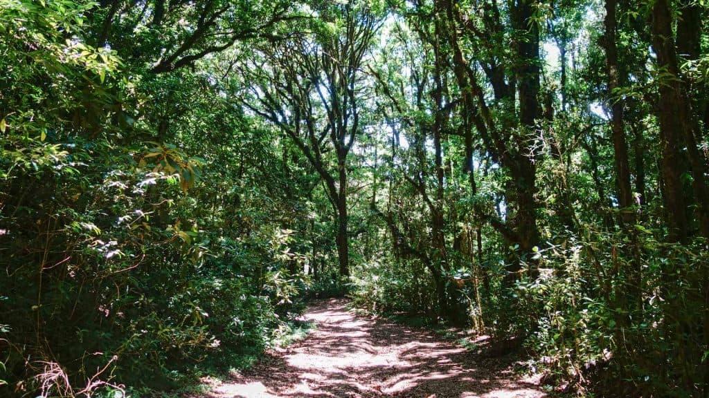 Jungle path in La Tigra National Park
