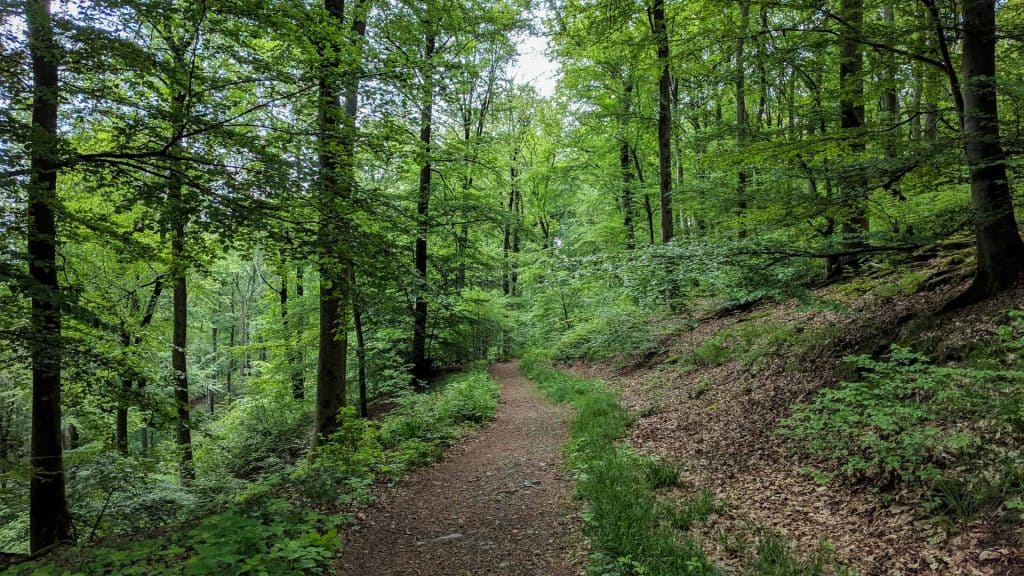 Forest path on the Three Castle Hike