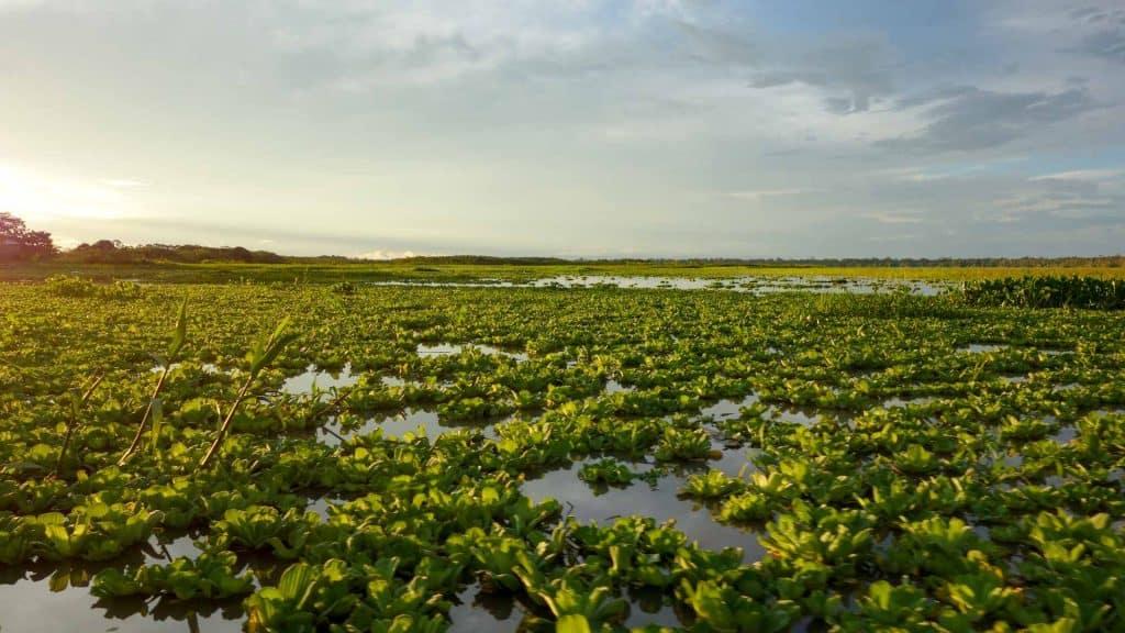 The Amazon river in Peru