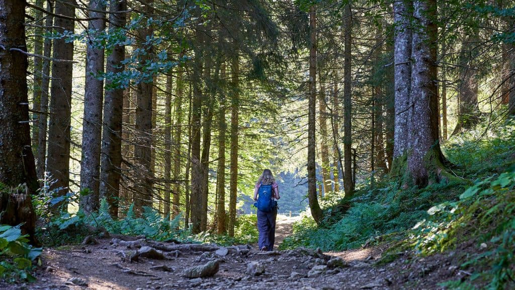 Ilona walking throught the forest to go to lake Schrecksee