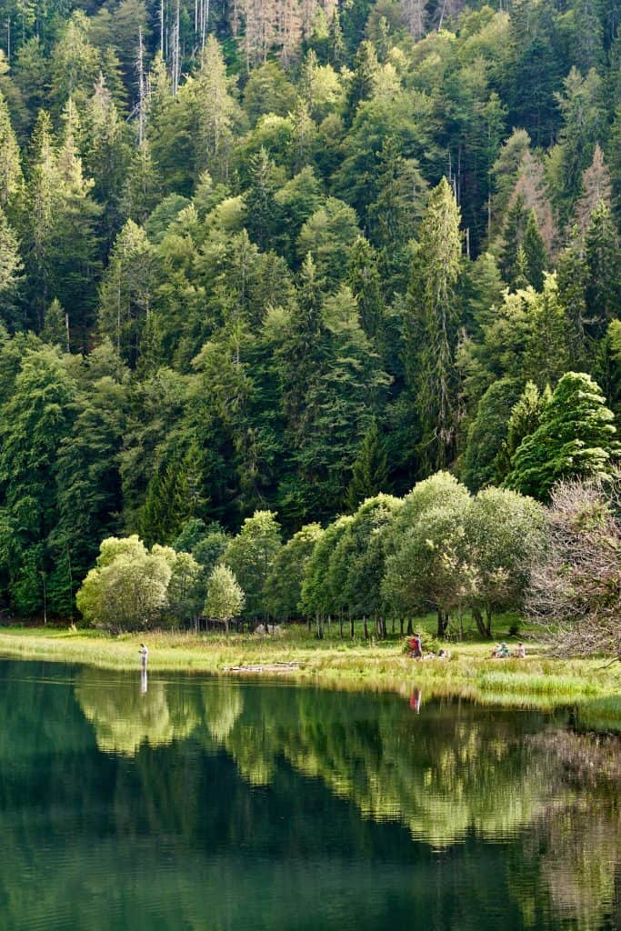 Lake in the Black Forest