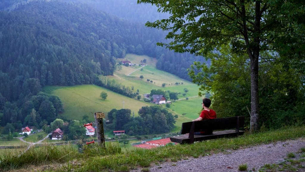 View in the Black Forest