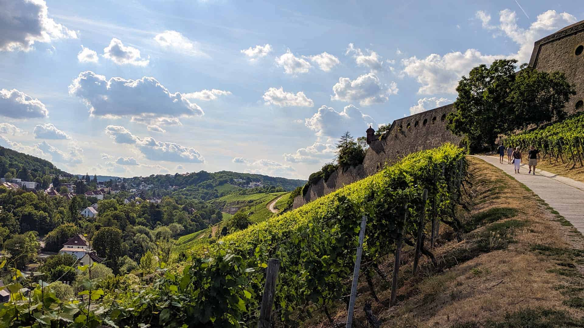 Vineyards in Wurzburg
