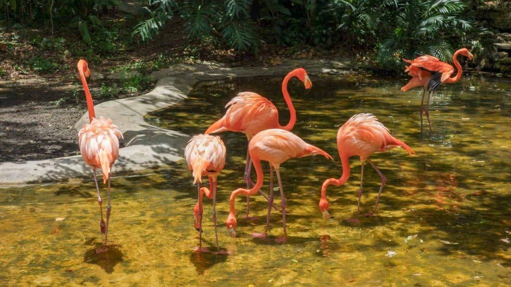 Flamingos in Mexico